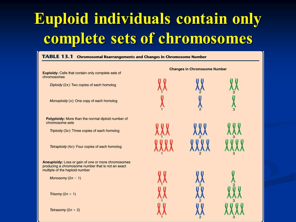 Euploid individuals contain only complete sets of chromosomes