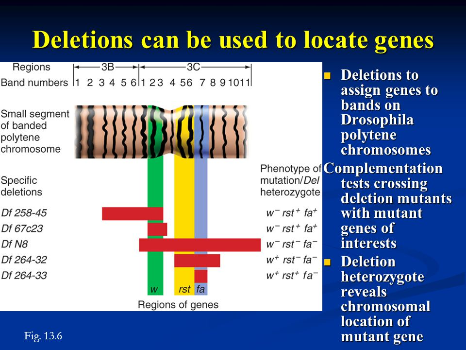 Deletions can be used to locate genes