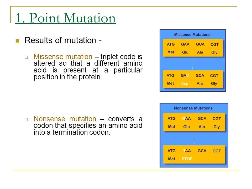 1. Point Mutation Results of mutation -