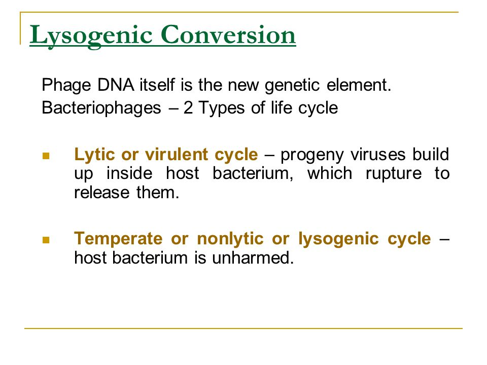 Lysogenic Conversion Phage DNA itself is the new genetic element.