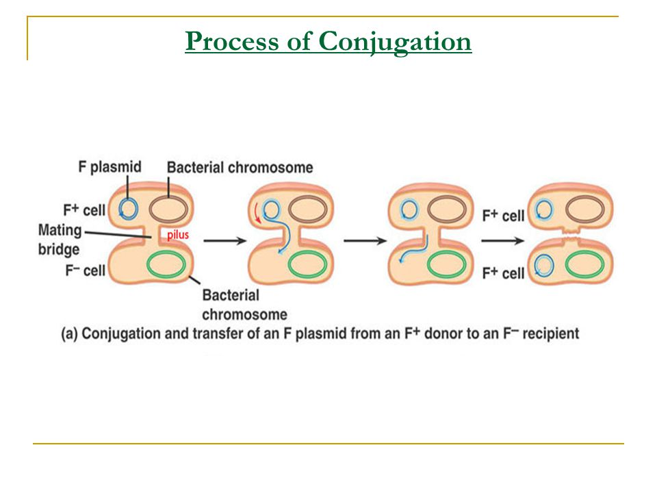 Process of Conjugation