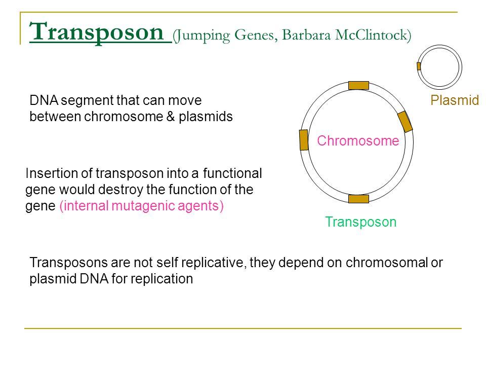Transposon (Jumping Genes, Barbara McClintock)