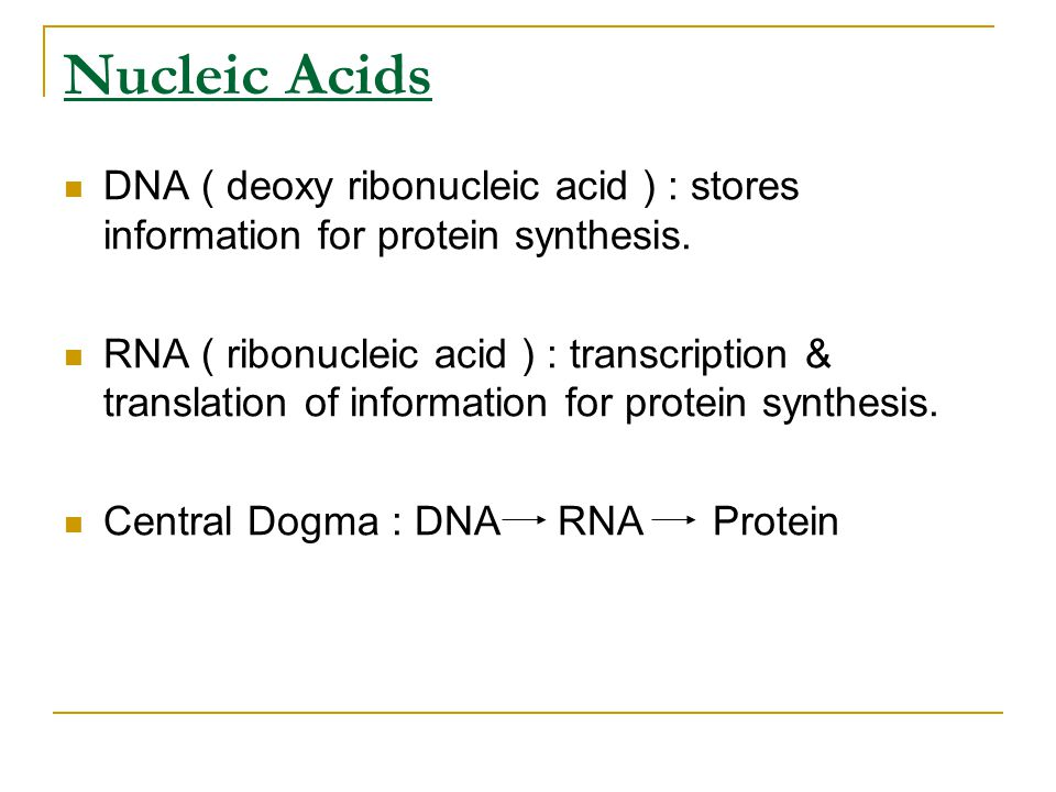 Nucleic Acids DNA ( deoxy ribonucleic acid ) : stores information for protein synthesis.