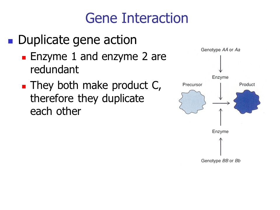 Gene Interaction Duplicate gene action