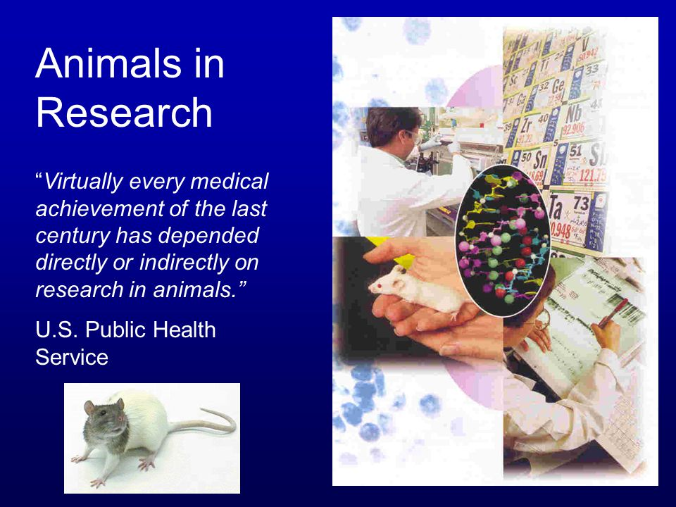 Animals in Research Virtually every medical achievement of the last century has depended directly or indirectly on research in animals.