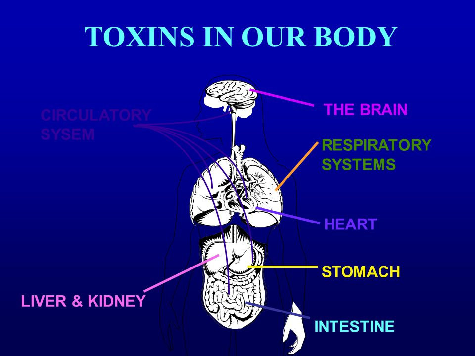 TOXINS IN OUR BODY THE BRAIN CIRCULATORY SYSEM RESPIRATORY SYSTEMS