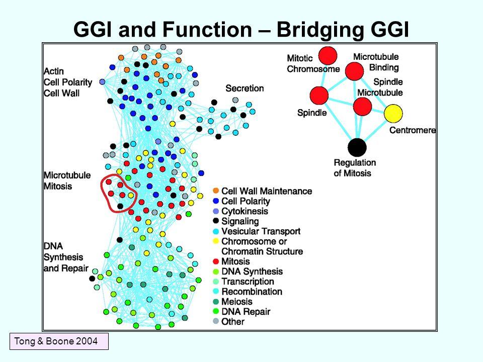 GGI and Function – Bridging GGI