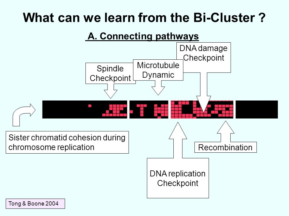 What can we learn from the Bi-Cluster