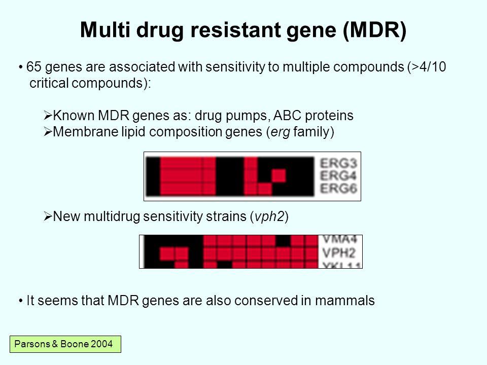 Multi drug resistant gene (MDR)