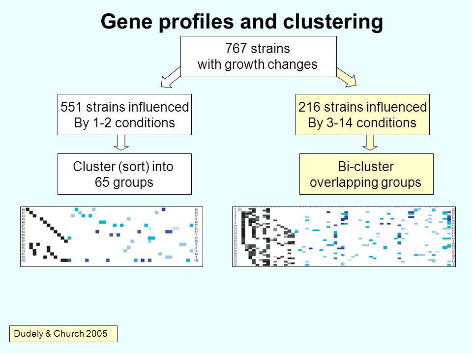 Gene profiles and clustering