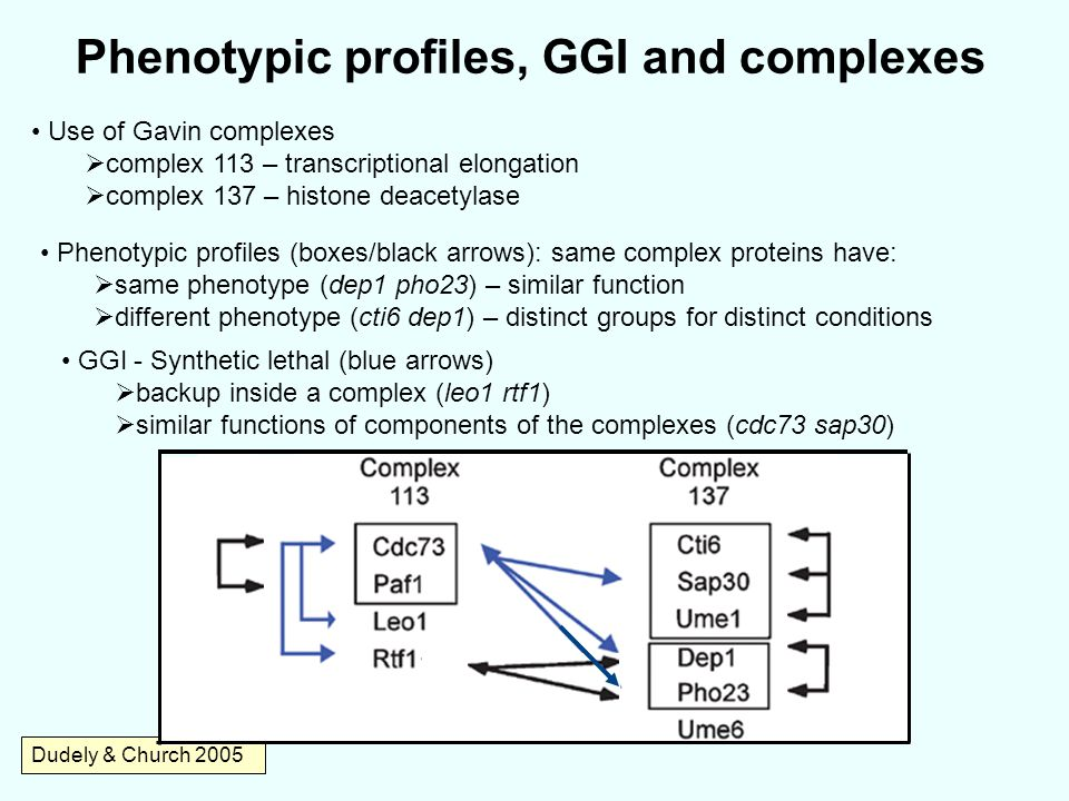 Phenotypic profiles, GGI and complexes