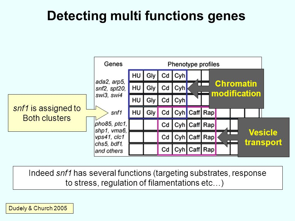 Detecting multi functions genes