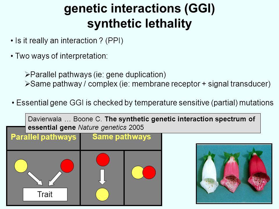 genetic interactions (GGI) synthetic lethality