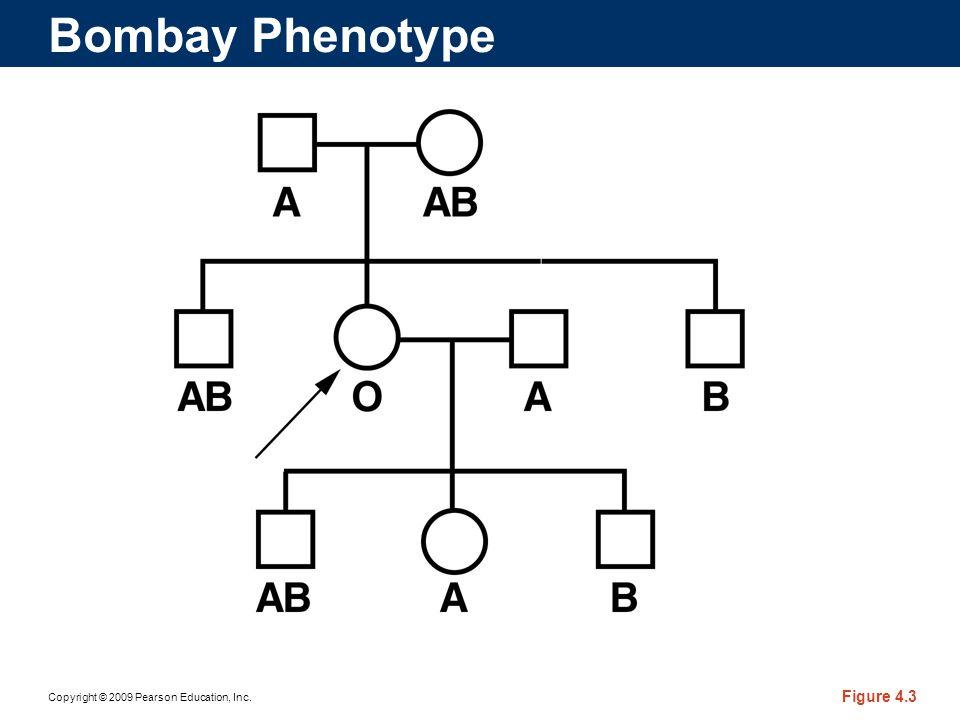 Bombay Phenotype
