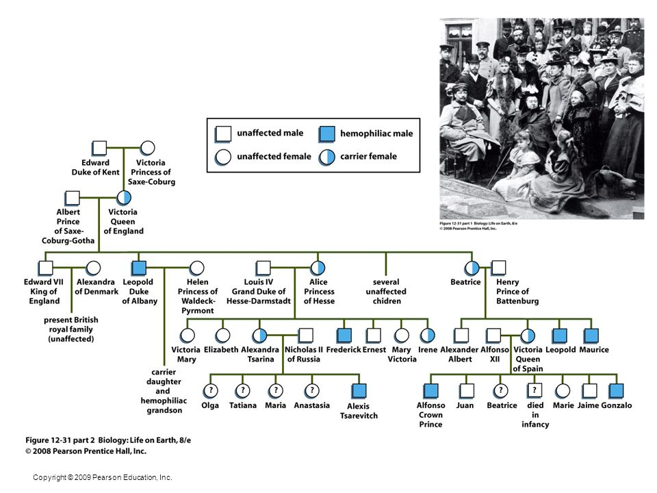 Figure 12-31 part 2 Hemophilia among the royal families of Europe