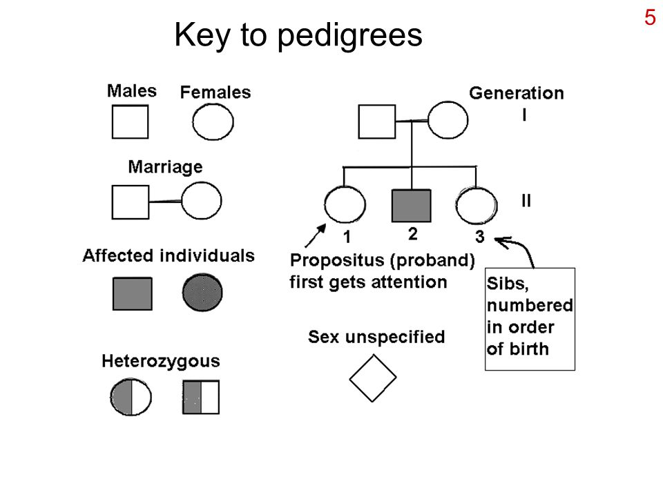Key to pedigrees