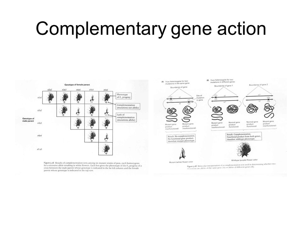 Complementary gene action