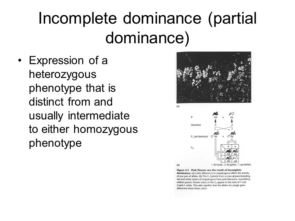 Incomplete dominance (partial dominance)