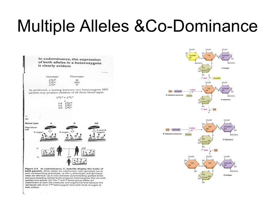 Multiple Alleles &Co-Dominance
