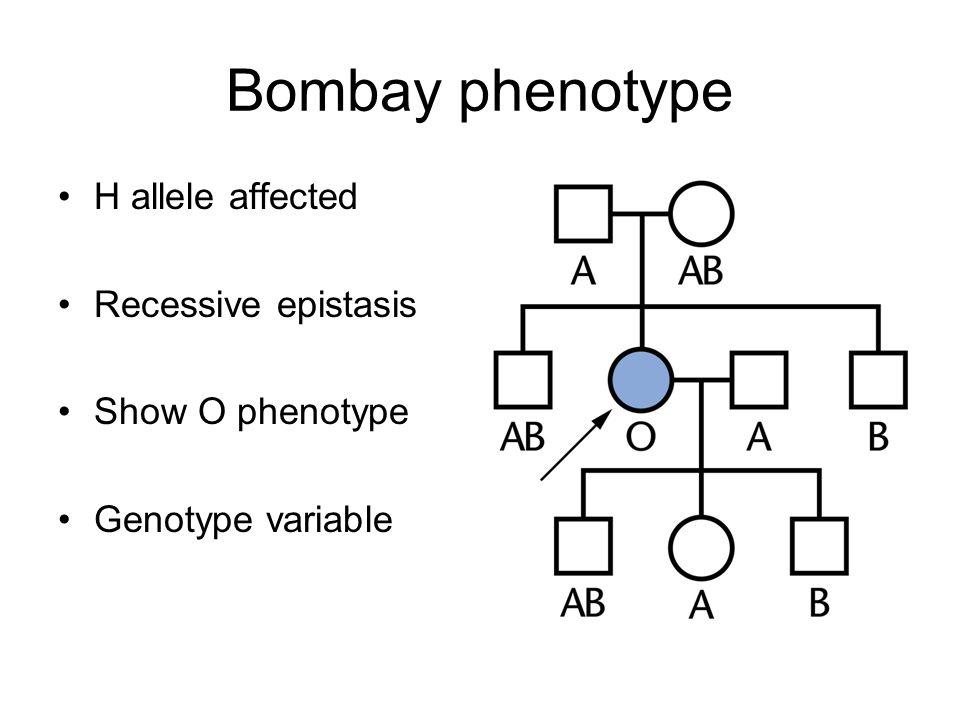 Bombay phenotype H allele affected Recessive epistasis