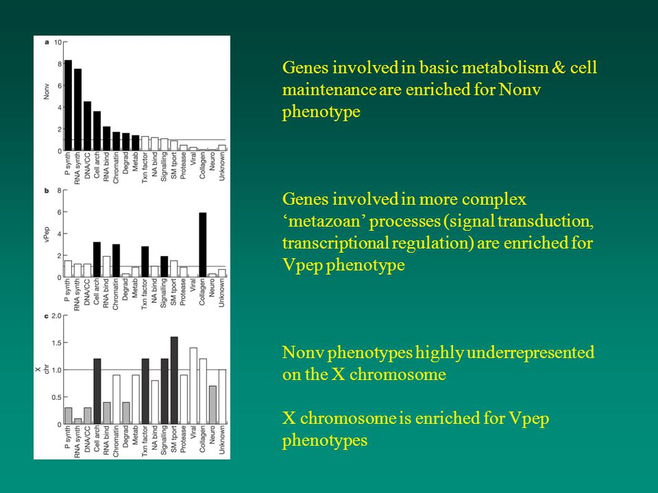 Genes involved in basic metabolism & cell maintenance are enriched for Nonv phenotype Genes involved in more complex 'metazoan' processes (signal transduction, transcriptional regulation) are enriched for Vpep phenotype Nonv phenotypes highly underrepresented on the X chromosome X chromosome is enriched for Vpep phenotypes