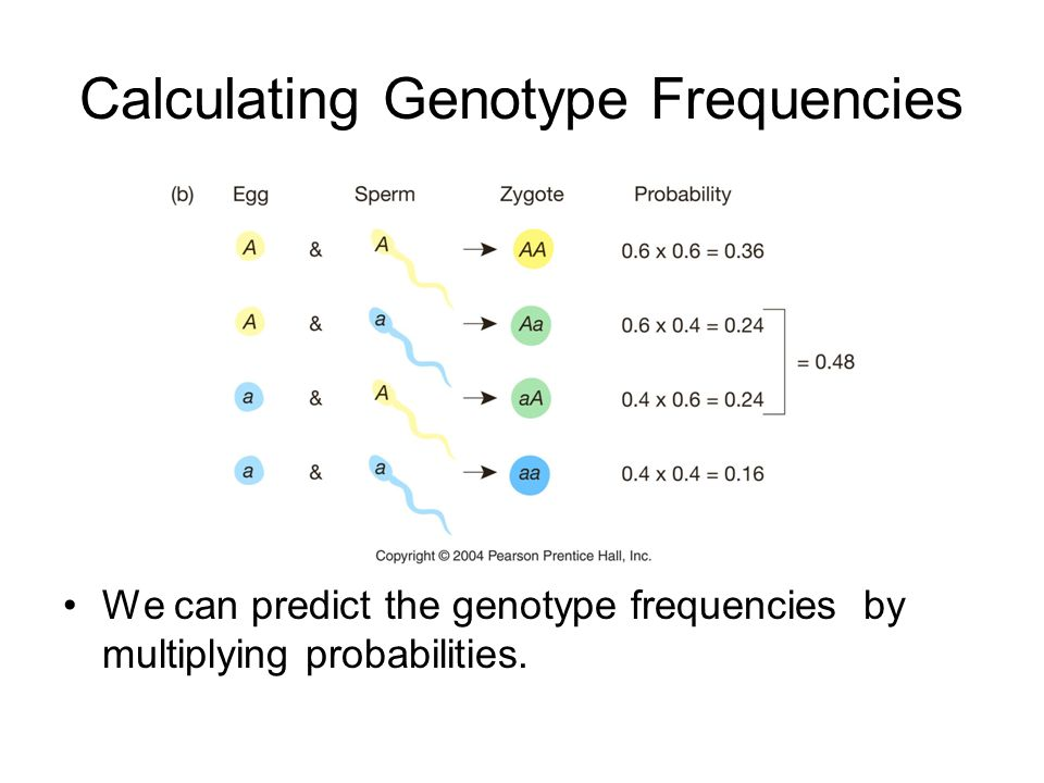 Calculating Genotype Frequencies