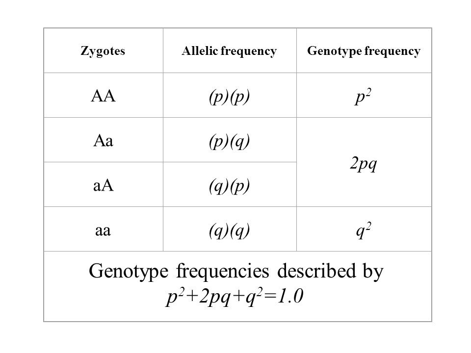 Genotype frequencies described by p2+2pq+q2=1.0
