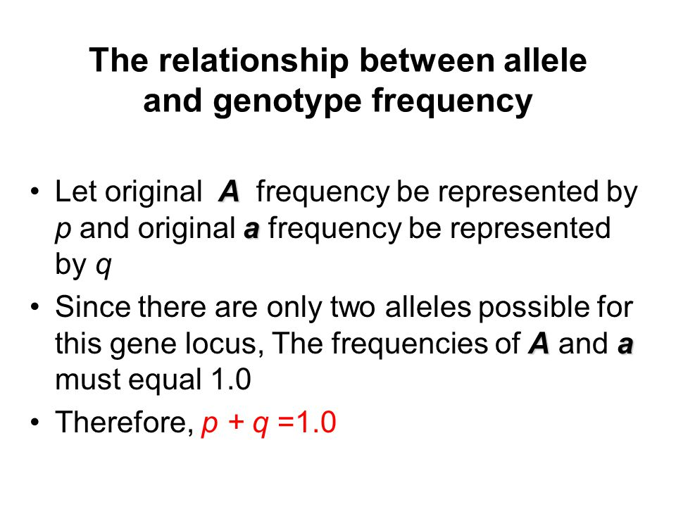 The relationship between allele and genotype frequency