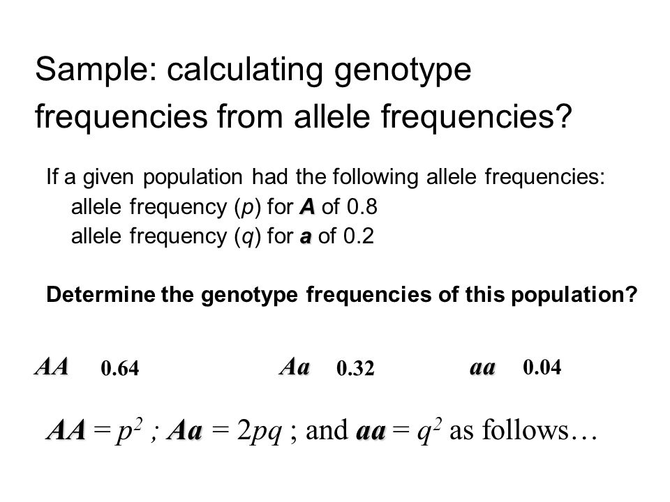 Sample: calculating genotype frequencies from allele frequencies
