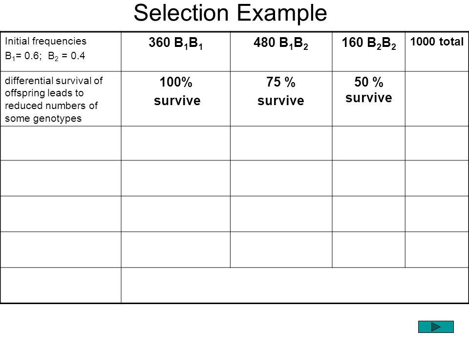 Selection Example 360 B1B1 480 B1B2 160 B2B2 100% survive 75 %