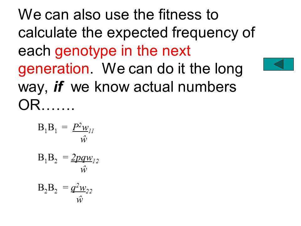 We can also use the fitness to calculate the expected frequency of each genotype in the next generation. We can do it the long way, if we know actual numbers OR…….
