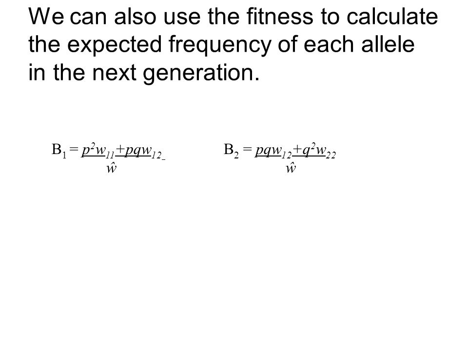 We can also use the fitness to calculate the expected frequency of each allele in the next generation.