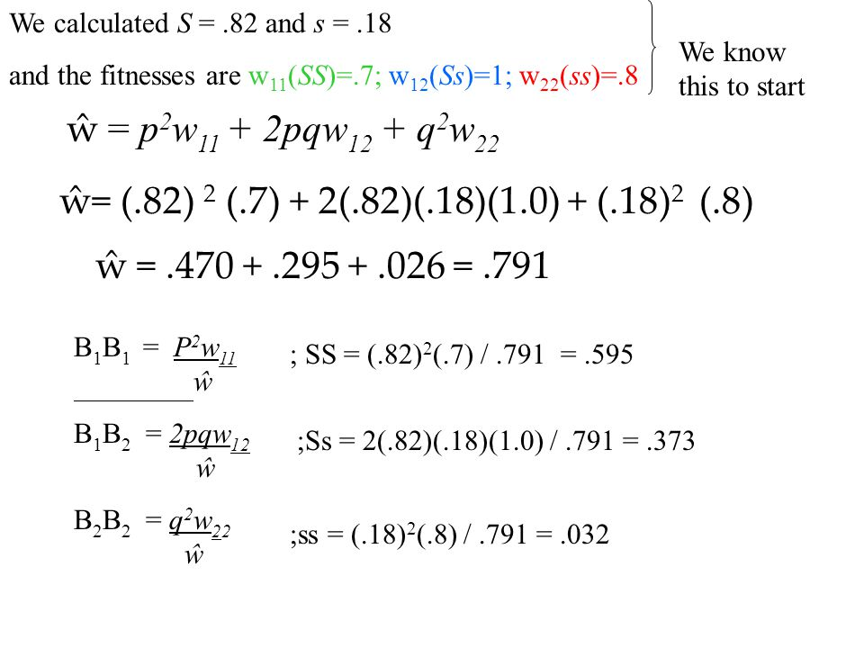 We calculated S = .82 and s = .18 and the fitnesses are w11(SS)=.7; w12(Ss)=1; w22(ss)=.8. We know this to start.