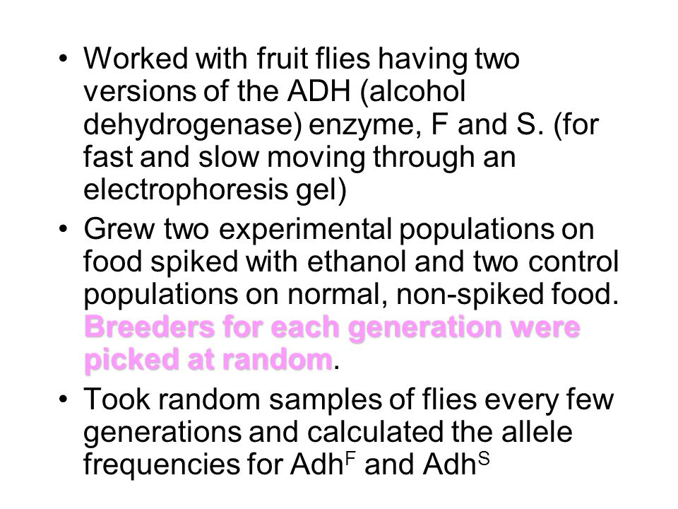 Worked with fruit flies having two versions of the ADH (alcohol dehydrogenase) enzyme, F and S. (for fast and slow moving through an electrophoresis gel)