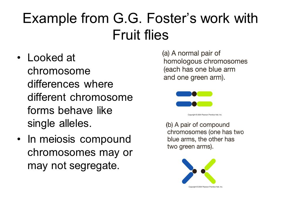Example from G.G. Foster's work with Fruit flies
