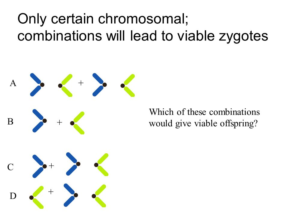Only certain chromosomal; combinations will lead to viable zygotes