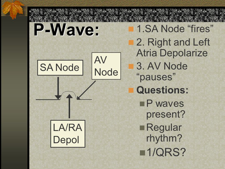 P-Wave: 1/QRS 1.SA Node fires 2. Right and Left Atria Depolarize