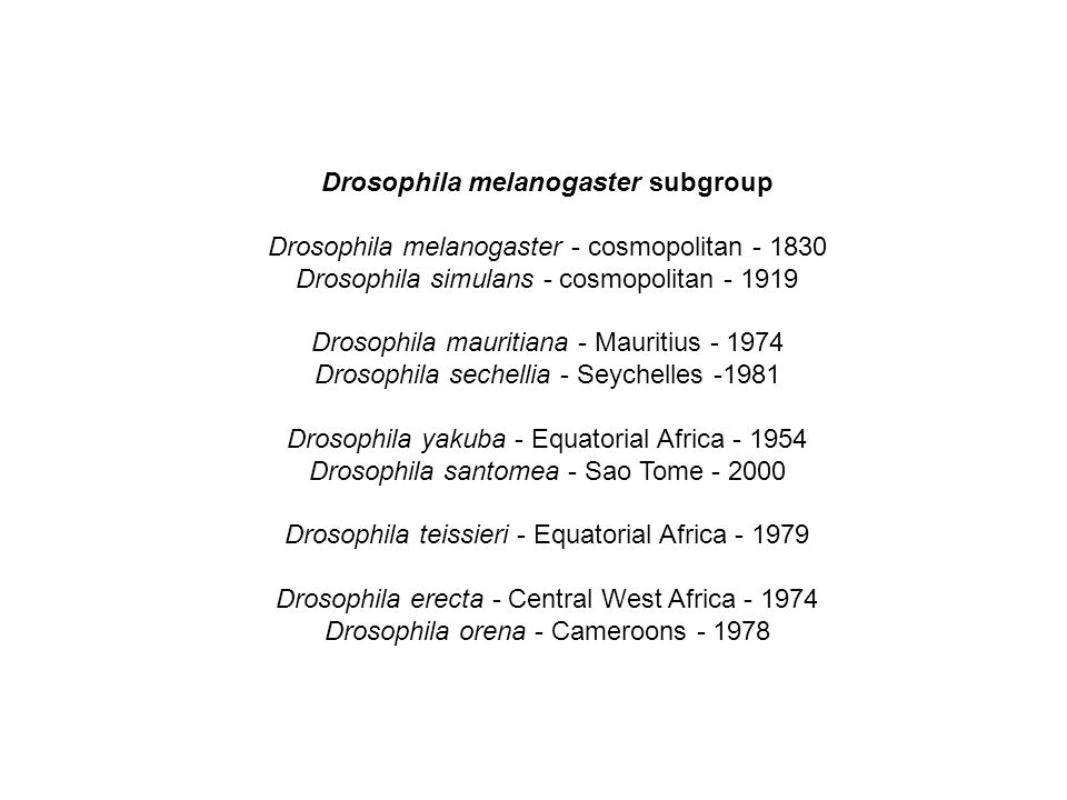Drosophila melanogaster subgroup