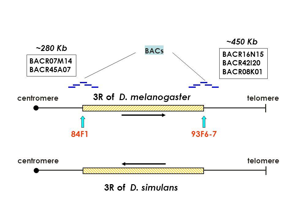3R of D. melanogaster 3R of D. simulans ~450 Kb ~280 Kb 84F1 93F6-7