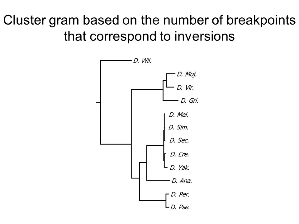 Cluster gram based on the number of breakpoints that correspond to inversions
