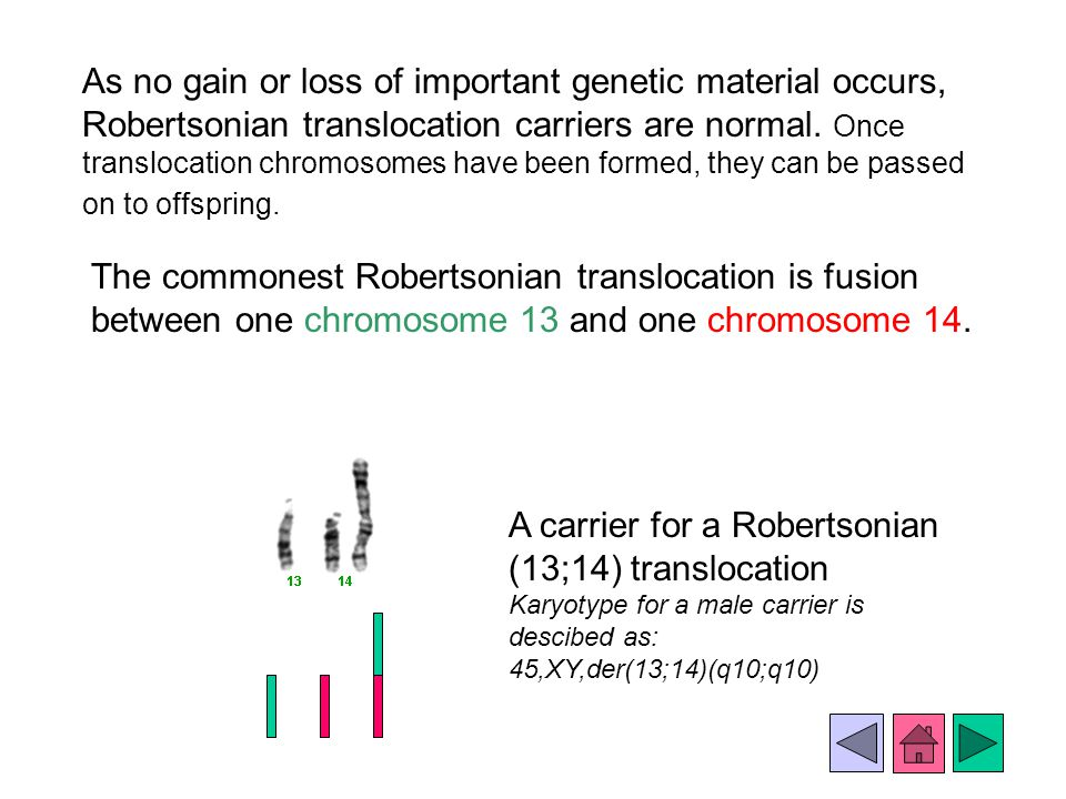A carrier for a Robertsonian (13;14) translocation