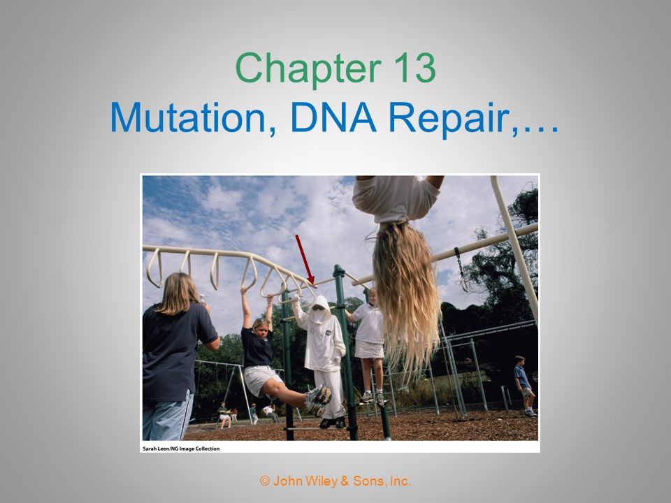 Chapter 13 Mutation, DNA Repair,…
