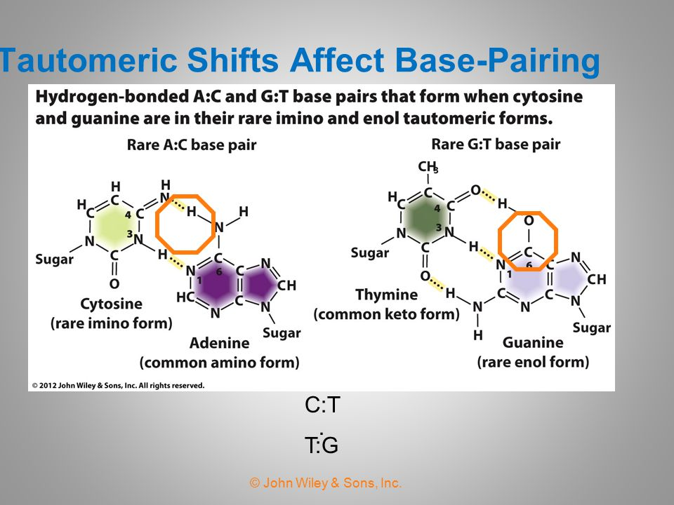 Tautomeric Shifts Affect Base-Pairing