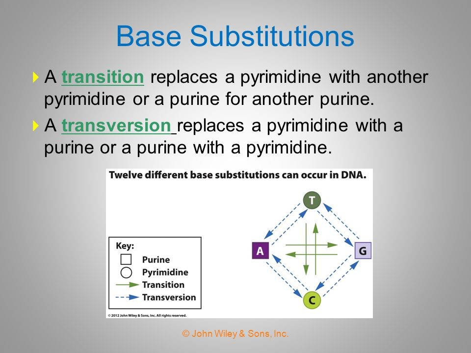 Base Substitutions A transition replaces a pyrimidine with another pyrimidine or a purine for another purine.