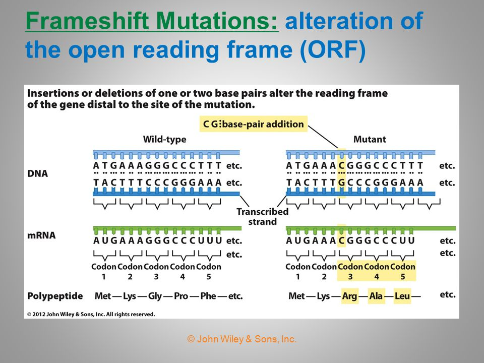 Frameshift Mutations: alteration of the open reading frame (ORF)