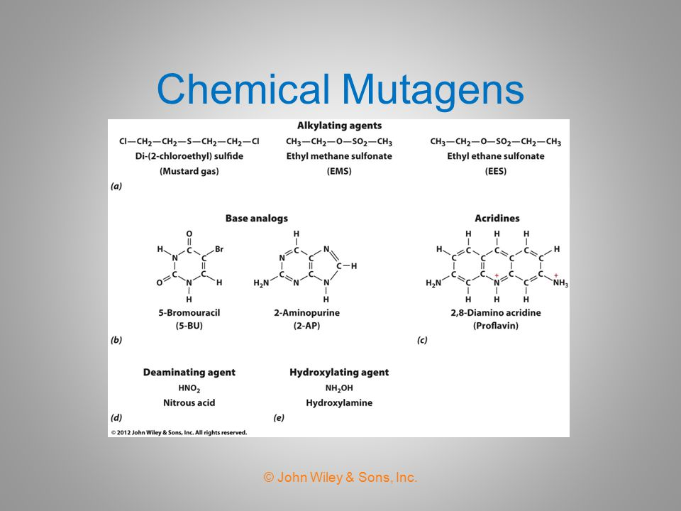 Chemical Mutagens © John Wiley & Sons, Inc.