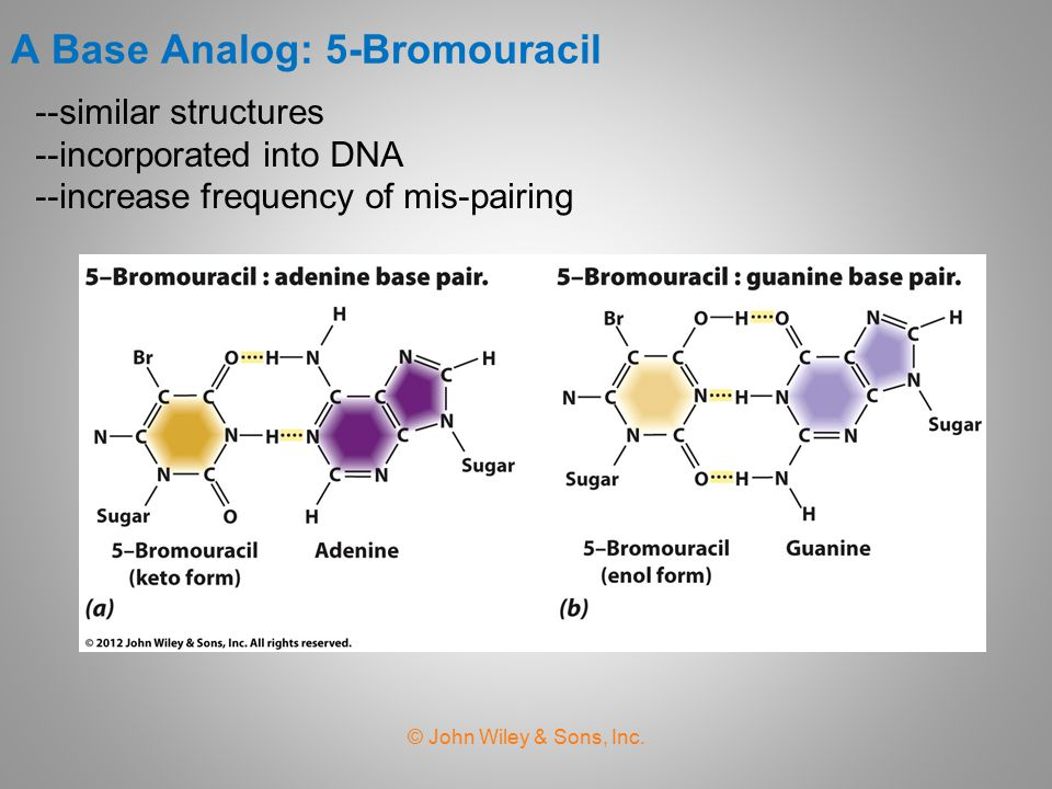 A Base Analog: 5-Bromouracil