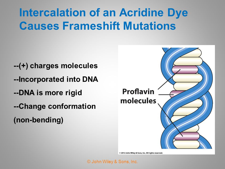 Intercalation of an Acridine Dye Causes Frameshift Mutations