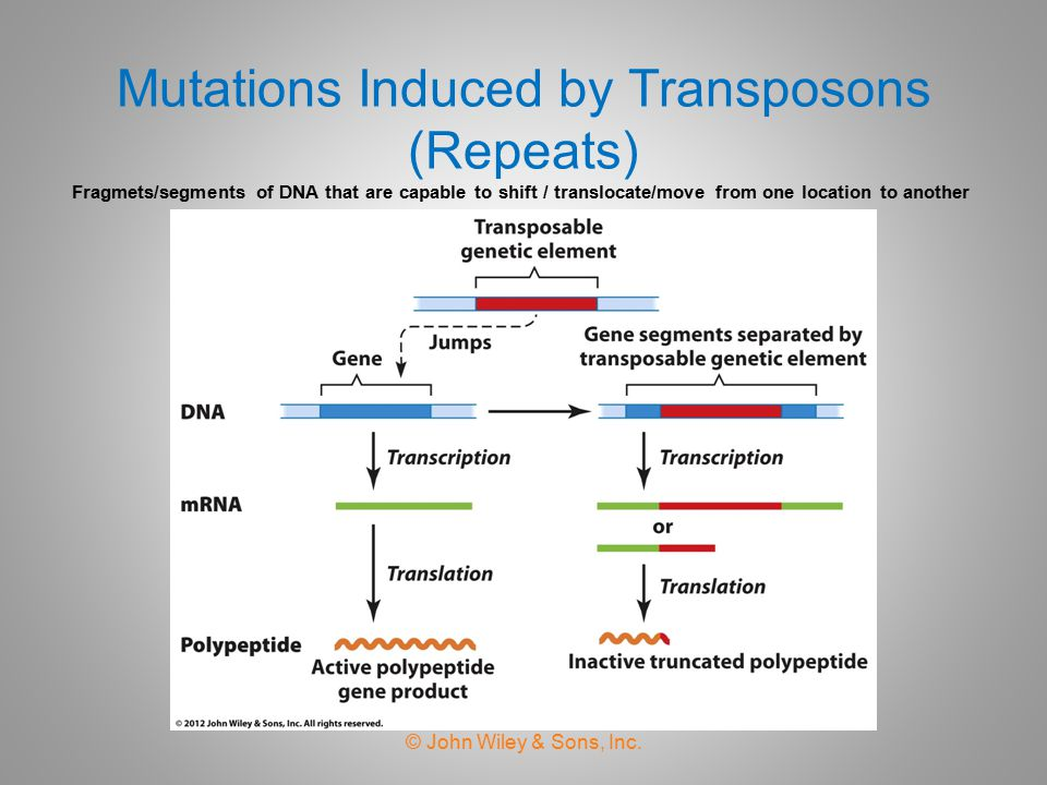 Mutations Induced by Transposons (Repeats)