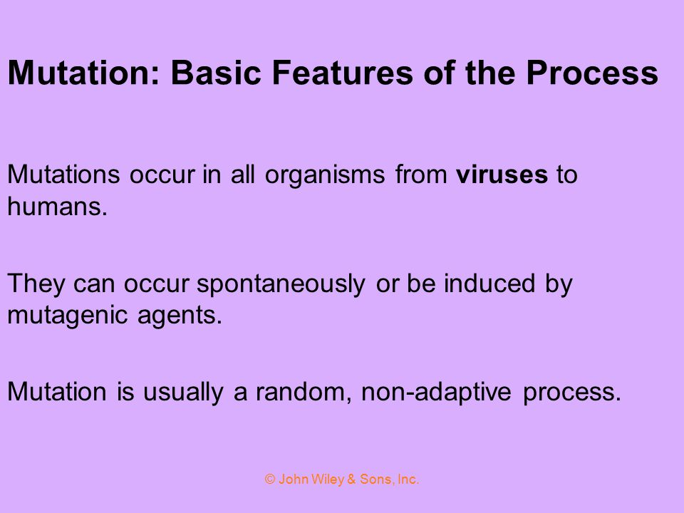 Mutation: Basic Features of the Process